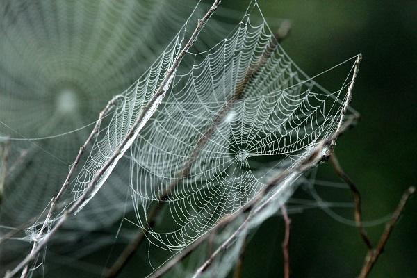 mreža pauka