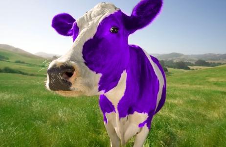 ljubičasta krava 2