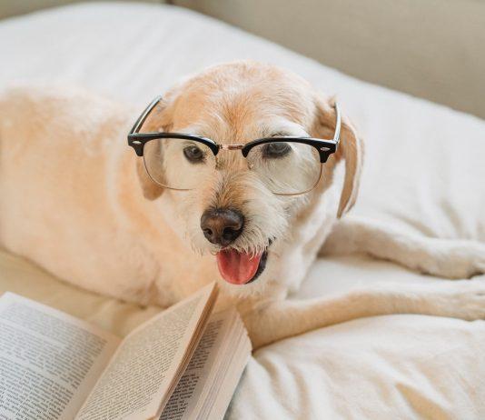 pas-s-naočarima