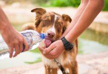 pas-pije-vodu